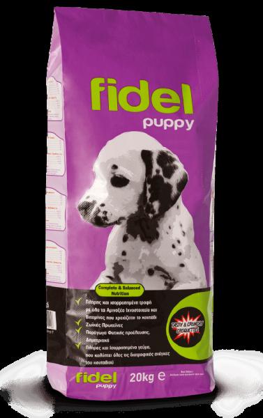 Fidel_Puppy