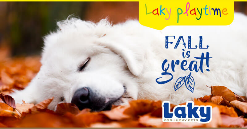 Laky playtime: Fall is great!