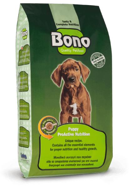 Bono_Puppy