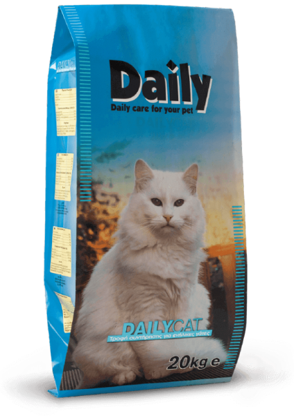 Daily_Cat