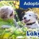Laky_June_Adoption