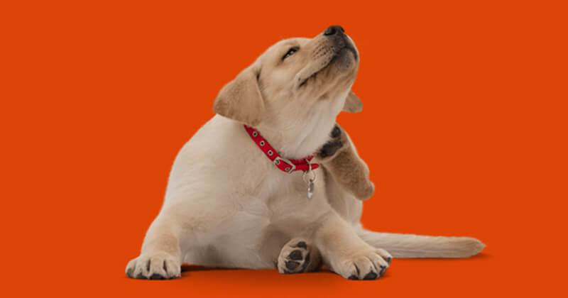 puppy_ear_scratch